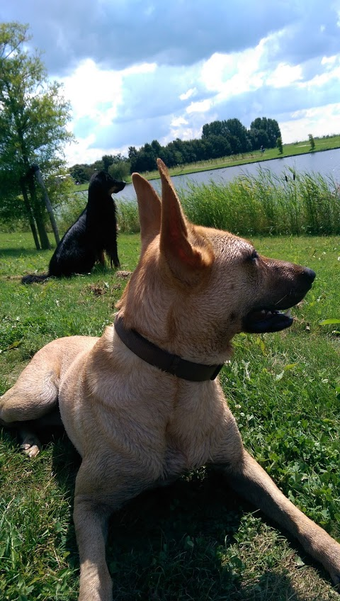 Hondenuitlaatservice kita